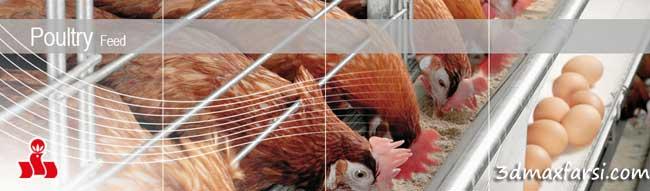 طراحی مرغداری پرورش پرندگان دانلود رساله پایان نامه معماری
