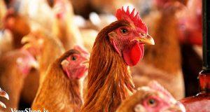 طراحی مرغداری، پرورش پرندگان با نقشه اتوکد